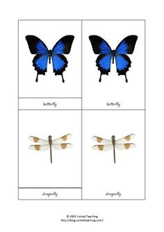 Montessori Three Part Cards - Insects
