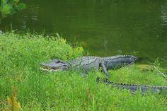 Everglades national park www. Everglades National Park, National Parks