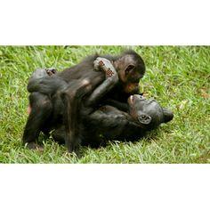 Amor y sexo entre primates Primates, Mammals, Hump Day Humor, Garden Sculpture, Outdoor Decor, Amor, Primate