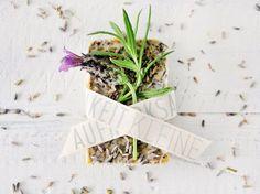 DIY-Anleitung: Zitronenseife, Lavendelseife und Grapefruitseife selber machen via DaWanda.com Grapefruit, Container, Handmade, Advent, Cosmetics, Beauty, Bricolage, Crafting, Homemade Cosmetics