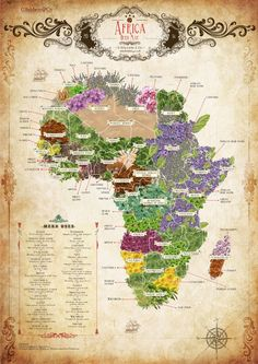 Non-exhaustive/general/non-detailed map of some African herbs. Obviously, there are thousands of species of African plants even in one tiny locale, and many times, species overlap. So this map is just that - a map. African Herbs, African Plants, By Any Means Necessary, Map Globe, Out Of Africa, Old Maps, Vintage Maps, Historical Maps, African American History