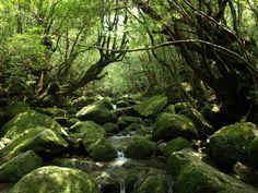 Somewhere in Yakushima Japan [3200x2400] [OC] landscape Nature Photos