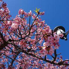 【ongakubitoyoshi】さんのInstagramをピンしています。 《桜  #日本 #風景 #さくら #桜 #写真好きな人と繋がりたい #photo #フォロー #フォローミー #fllowme #fllow》