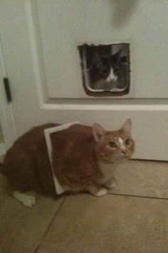 27 Cats That Immediately Regret Their Decisions