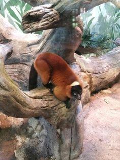 Fun time at Akron Zoo
