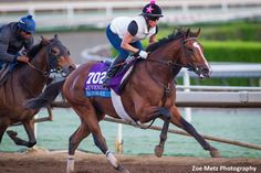 """Undefeated FrontRunner winner Gormley worked six furlongs Saturday morning at Santa Anita, ridden by Chantal Sutherland in a pedestrian 1:16.40 for the $2 million Sentient Jet Breeders' Cup Juvenile next Saturday. Victor Espinoza will have the mount. """"His ears were up and John (Shirreffs) just wanted to keep him happy,"""" Sutherland said. """"He wasn't worried …"""