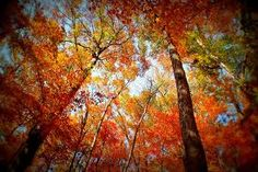 End of fall - Google Search