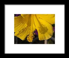 Flowers Framed Print featuring the photograph Yellow Rapture by Janis Kirstein