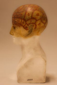 Life cast of human head made in the Pacific region during Dumont d'Urville's last exploratory voyage of 1837-40 by the phrenologist Pierre-Marie Alexandre Dumoutier (1791-1871)