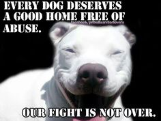 Every dog!