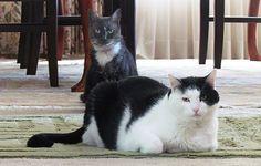 Friday Cat Blogging - 15 June 2012