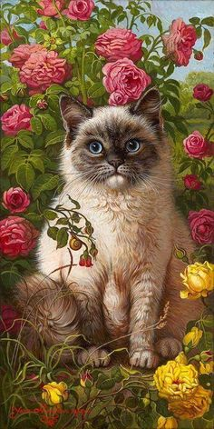 Rosas e gato