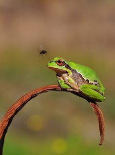 Awesome frog photo