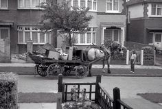 """Remember the rag and bone man? """"Any old iron"""" he used to call. Well, this is me looking at his horse! I guess this would have been about 1965? Social history!"""