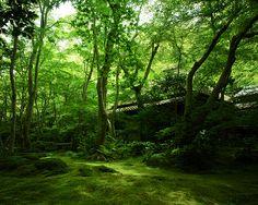 Gio-ji Temple #kyoto #japan
