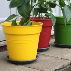 Add instant colour to your patio, balcony, or courtyard and give your plants something to aspire too; supplied in shocking Tomato Red, cool Cucumber Green and hot Pepper Yellow, the groovy planters will certainly be a garden talking point! - Giant Tomato Planters - Harrod Horticultural http://www.harrodhorticultural.com/giant-tomato-planters-pid8759.html