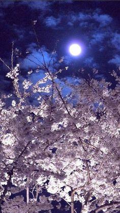 iPhone壁紙 お花見・夜桜・花吹雪 美しい桜のある風景 - NAVER まとめ