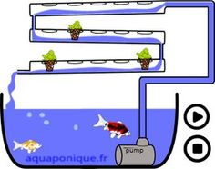 Aquaponics DIY Indoor - Fundamental Criteria Of Backyard Aquaponics Across The Uk - Wheaur