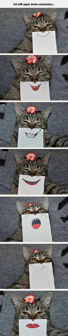 funny pet photo 5