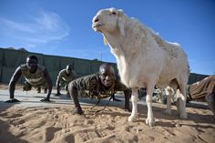 Senegalese peacekeepers with the African Union-United Nations Hybrid Operation in Darfur (UNAMID) train at their team site in Um Baro, Sudan, beside their pet sheep, bought years earlier by a former Senegalese contingent. Having a sheep at the base is an ancient military tradition in Senegal that is said to guarantee protection against any difficulties or threats.  Photo ID 494841. 14/11/2011. Um Baro, Sudan. UN Photo/Albert Gonzalez Farran