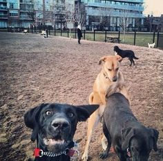 Dog Photobombs A Sexy Photoshoot