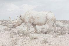 """Kategorie Professional, Landscape, Sieger  Maroesjka Lavigne, Belgien. """"Land of Nothingness""""  Namibia, einer der am wenigsten besiedelten Orte der Welt. Gut für die Tiere, hoffentlich."""