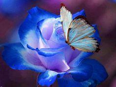 Rose bleue