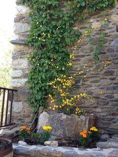 Las flores hacen aún más bonita nuestra fachada