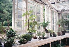 a glamorous greenhouse.