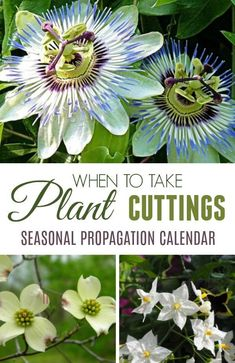 Gardening Vegetables Growing new plants from cuttings is an easy way to get more of the plants. This seasonal calendar shows some of the plants you can propagate by softwood, semi-ripe, and hardwood cuttings throughout the year. Diy Garden, Dream Garden, Garden Projects, Garden Plants, House Plants, Garden Landscaping, Garden Kids, Garden Tools, Growing Plants