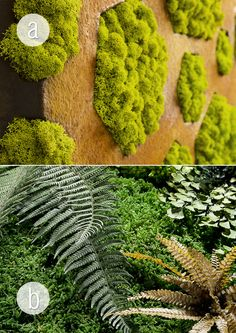 Oryginalny mech od Moss Trend dostępny w BandIt Design. #chrobotek #paprocie #mech #moss #zielonesciany #ogrod #taras #mosstrend #jungle #junglemoss