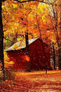 Barn in Fall Fall Pictures, Fall Photos, Autumn Scenes, All Nature, Autumn Leaves, Autumn Fall, Scenery, Seasons, Halloween