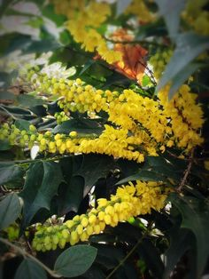 It is a season which yellow worries.
