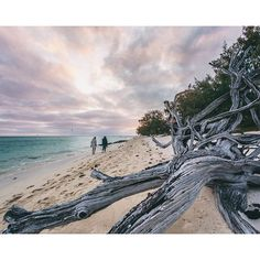 Early morning stroll along Heron Island by Adventure Holiday, Gladstone, Sea Birds, Camping And Hiking, Great Barrier Reef, Heron, Early Morning, Beaches, National Parks