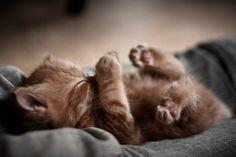 Adorable sleepy kitten via Mousebreath! A magazine for cats ~ Sweet Dreams beautiful friends ♥ Cute Kittens, Beautiful Kittens, Animals Beautiful, Fluffy Kittens, Pretty Cats, Beautiful Things, Baby Animals, Funny Animals, Cute Animals