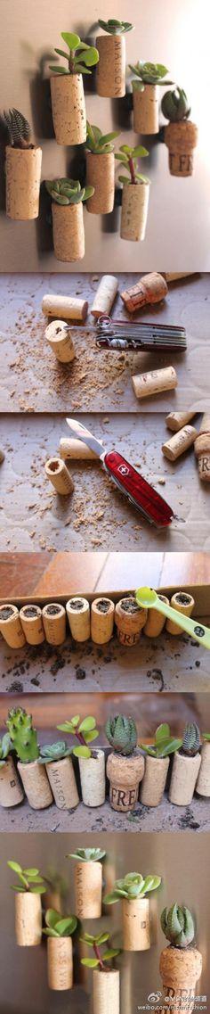 Leuk en lekker groen idee! Maak magneetjes van vetplantjes en kurken... voor op de koelkast