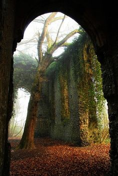 Tree growing inside church ruins in Norfolk, England