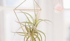 DIY Geometric Air Plant Cages