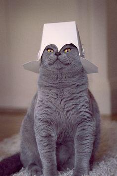 Crazy kitty cat