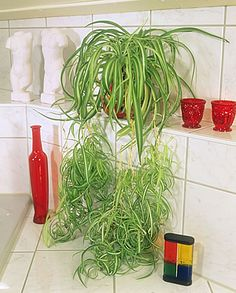 5 párakedvelő növény a fürdőszobába Indoor Plants, Home And Garden, Flowers, Outdoor, Ideas, Home Decor, Garden, Plants, Inside Plants