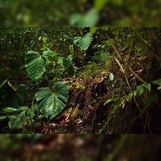 On instagram by mergulhosetrilhasnotocantins #landscape #contratahotel (o) http://ift.tt/1Q6tYvL . .Marque: #mergulhosetrilhasnotocantins . . #trekking #travel #nationalgeographic  #planet #Tocantins #trilha  #taquaruçú #cachoeira #waterfall #trilhandotrilhas #trilhandomontanhas #viajando_na_viagem #mountain #LOVES_LANDSCAPE  #discovery #nationalgeographic #roots #brazil_repost #fazenda #brejinho