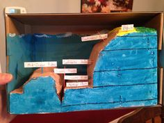 Ocean Floor Diorama  Carved from extra styrofoam out of a package. Dimensions aren't exactly correct, but the styrofoam was already cut a certain way, so we did the best we could! Painted with regular crayola paint, and shoved into a shoebox! Labels are just made from paper taped to toothpicks.