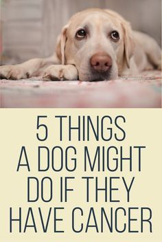 5 Things a dog might do if they have cancer.