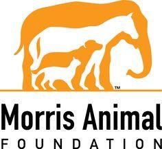 Morris Animal Foundation #pmtsdanbury #funraising #paulmitchell #paulmitchellschools