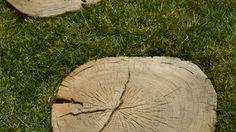 EHL-Baumscheiben