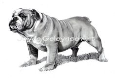 Art PRINT: English Bulldog, Dog in Pencil, Drawing, Fine Art on Etsy, $15.00
