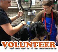 SAPA – San Antonio Pets Alive   Adopt a Dog