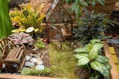 Garden Art forum: Minature Gardens (All Things Plants)