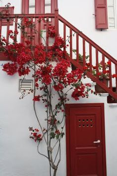 Contrasting Shutters, door and trim and that beautiful bougainvillea ~ Greece. Inspiration for the exterior of our new old home!