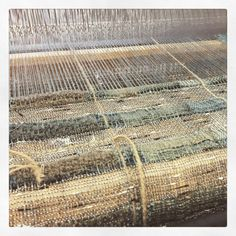Hand dyed and hand woven #weaving #loom #fiber #naturaldyeing #textiles #bridgettesegraves